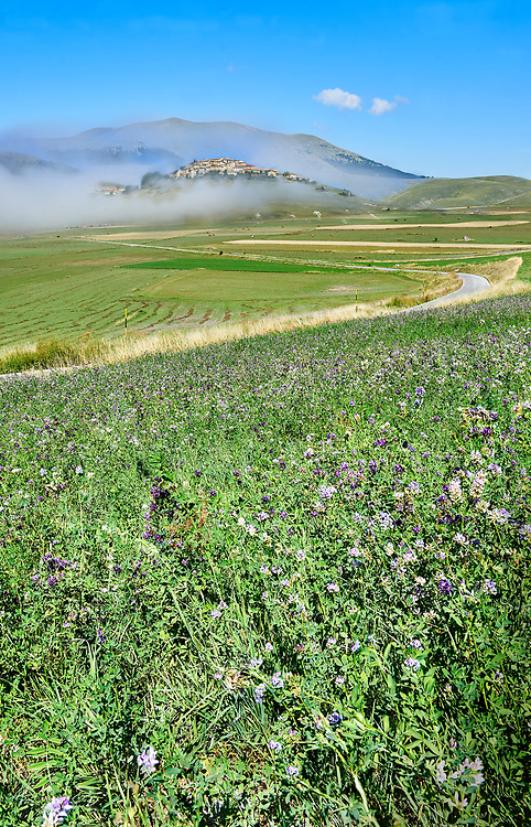Lentils growing on the Piano Grande, Great Plain, of Castelluccio di Norcia, Parco Nazionale dei Monti Sibillini , Apennine Mountains,  Umbria, Italy. .<br /> <br /> Visit our ITALY HISTORIC PLACES PHOTO COLLECTION for more   photos of Italy to download or buy as prints https://funkystock.photoshelter.com/gallery-collection/2b-Pictures-Images-of-Italy-Photos-of-Italian-Historic-Landmark-Sites/C0000qxA2zGFjd_k