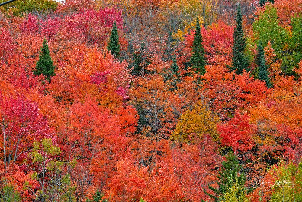 Autumn foliage in the hardwoods, Heyden, Ontario, Canada