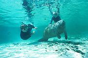 teenagers meets baby manatee, Trichechus manatus latirostris, Crystal River, Florida