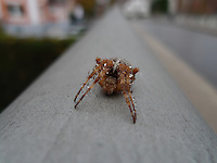 A small spider in a big city