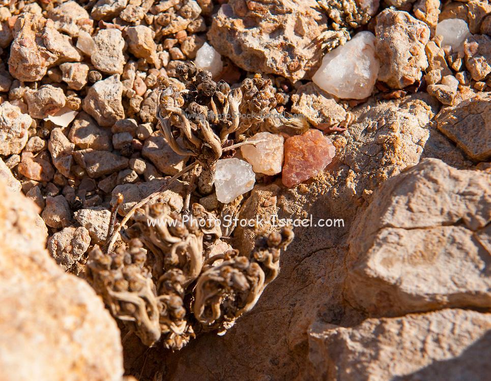 quartz stones, Brandberg Mountain, Damaraland, Namibia