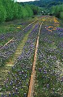 Lupine along train tracks in Northern California
