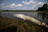 Rzeka Supraśl, przyducha ryb - 14.07.2021