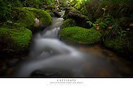 20x30 poster print of mountain stream.