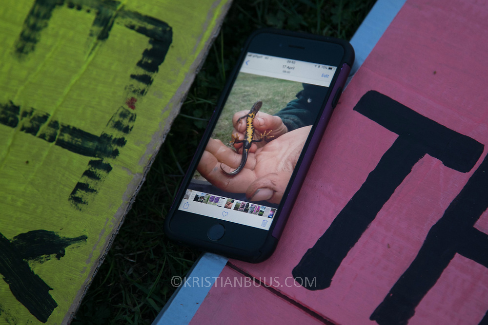 A rare Crested Newt on a phone, to be used to draw images on placards. Banner and placard making in the protector camp ahead of the the day of protest against the mining company Banks outside Dipton in Pont Valley, County Durham, 4 May 2018. Sunset in Pont Valley ahead of the the day of protest against the mining company Banks outside Dipton in Pont Valley, County Durham, 4 May 2018. Locals have fought the open cast coal mine for thirty years and three times the local council rejected planning permissions but central government has overruled that decision and the company Banks was granted the license and rights to extract coal in early 2018. Locals have teamed up with climate campaigners and together they try to prevent the mining from going ahead. The mining will have huge implications on the local environment and further coal extraction runs agains the Paris climate agreement. A rare species of crested newt live on the land planned for mining and protectors are trying to stop the mine to save the newt.