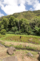 Hawaii: Molokai, Halawa Valley, taro fields, with hike in past taro fields, ancient walls, to waterfalls, guided by Lawrence Aki..Photo himolo226-72397..Photo copyright Lee Foster, www.fostertravel.com, lee@fostertravel.com, 510-549-2202