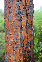 Cactus Bark, Charles Darwin Center