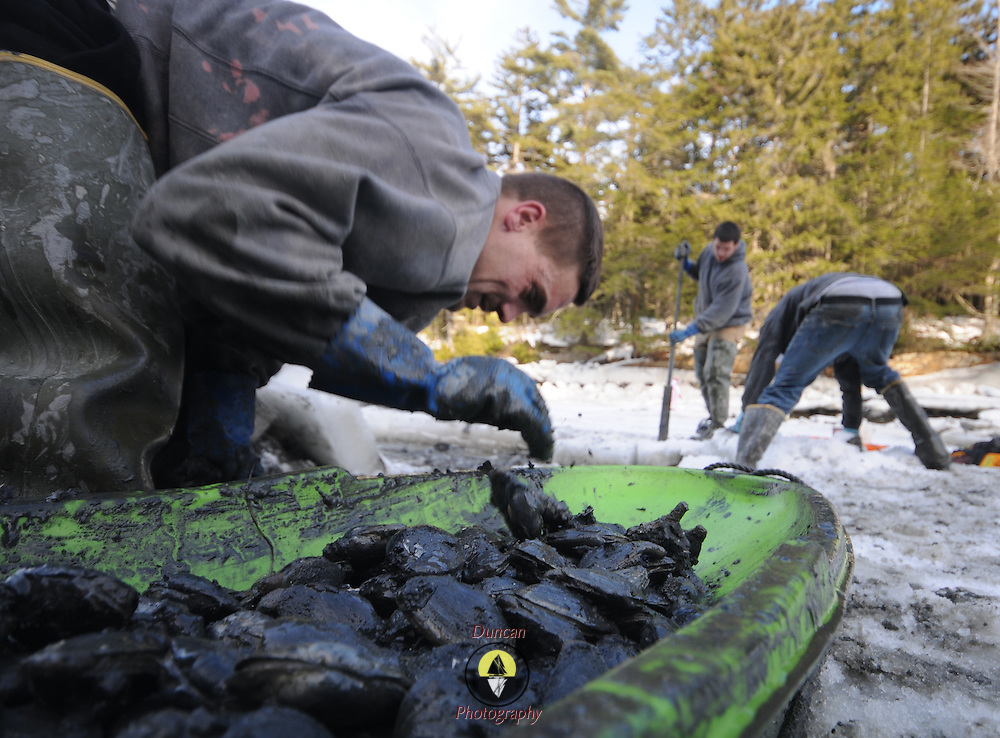 """2/17/11 -- HARPSWELL, Maine. David Wilson of Harpswell, left digs clams in Quahog Bay on Thursday afternoon. He and a small group of diggers cut through the ice at low water to dig here. <br /> Quahog Bay was reopened for digging on Feb 11 2011 after many years of closure, according to Department of Marine Resources Biotoxin Monitoring Manager, Darcie Couture. She wrote, """"This area had been closed for many years due to failing water quality, caused by bacterial pollution. A serious pollution source was recently identified and remediated.  The area will close in June for the summer, because unfortunately, this area, like many others on the Maine coast, suffer from the increased pressure of a seasonal summer population, which negatively impacts water quality, and results in many of our shellfish resources remaining closed to harvest during that time."""" Photo by Roger S. Duncan."""