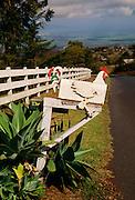 Mailbox, Haiku, Maui