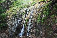 Pfeiffer Falls, Pfeiffer Big Sur State Park, California