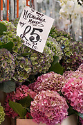 Hydrangea flowers on sale for at Columbia Road Flower Market on the 6th October 2019 in London in the United Kingdom. Columbia Road Flower Market is a street market in Bethnal Green in Hackney, London. The market is open on Sundays only.