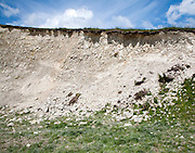 Soil profile cross section showing thin topsoil layer on top of white chalk rock Marlborough Downs, Wiltshire, England
