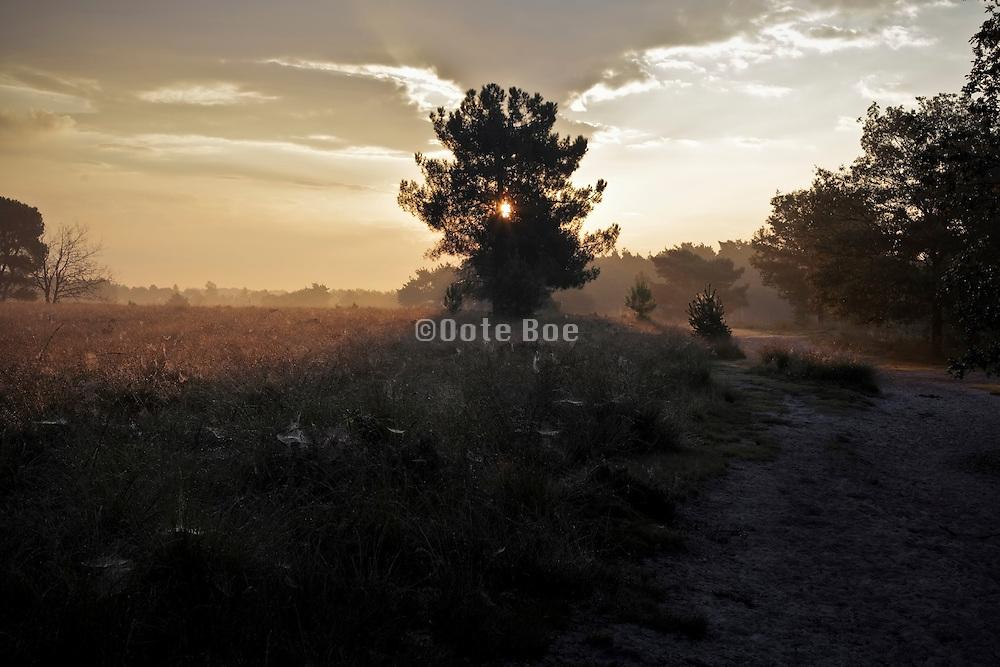 sun coming through tree early morning heath landscape Holland