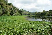 View of Gatun Lake, Panama, Central America, Gamboa Reserve, Parque Nacional Soberania