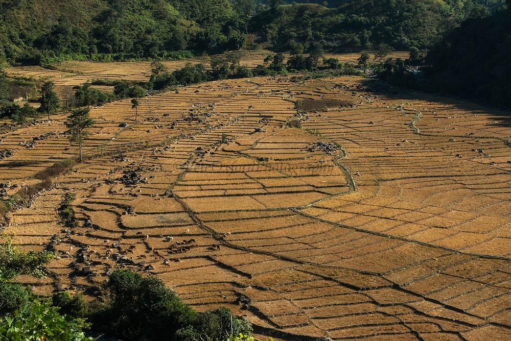 Nyshi rice paddies<br /> Yazali Village<br /> Nyshi Tribe<br /> Arunachal Pradesh<br /> North East India