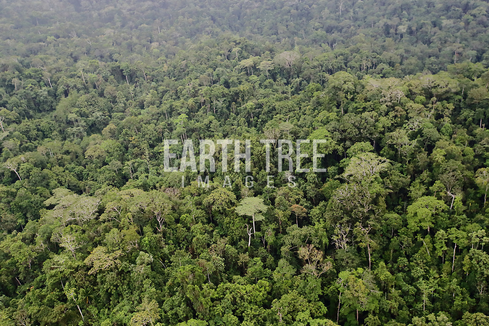 Forest cover, Papua, Indonesia.