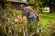 "12 AUGUST 2020 - SLATER, IOWA: DENNIS KOMMES uses a chain saw to clear debris in a residential neighborhood in Slater Wednesday, more than 48 hours after a windstorm ripped through the community. According to Iowa Governor Kim Reynolds, the storm damaged 10 million acres of corn and soybeans in Iowa, about 1 one-third of Iowa's 32 million acres of agricultural land. Justin Glisan, Iowa's state meteorologist, said the storm Monday, Aug. 10, lasted 14 hours and traveled 770 miles through the Midwest before losing strength in Ohio. The storm was a seldom seen ""derecho"" that packed straight line winds of nearly 100MPH. The storm pummelled Midwestern states from Nebraska to Ohio.     PHOTO BY JACK KURTZ"