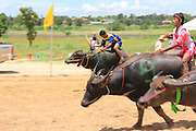 Photos of lake Mabprachan Pattaya Buffalo races<br /> <br /> Buffalo racing at Lake Mabprachan, Pattaya, Thailand,  the buffalo races coincided with the Pattaya Dragon Boat races and were run on the banks of Pattaya's Mabprachan lake.<br /> ©Exclusivepix Media