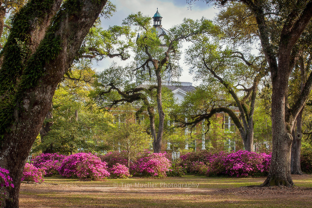 The West Feliciana Courthouse is barely visible through the oak trees and azaleas at Grace Episcopal Church in St. Francisville, La.