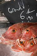 On a street market. Grondin, gurnard, gurnet at a fishmongers. On Les Quais. Bordeaux city, Aquitaine, Gironde, France