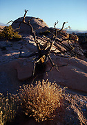 Late afternoon at Dune Mesa, Navajo Sandstone hummocks, Arches National Park, Utah.