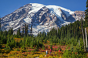 With sweeping views of Mount Rainier, hikers walk along the Skyline Trail, surrounded by fall colors. (Mike Siegel / The Seattle Times)