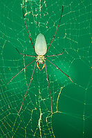 Closeup of a spider in a web. Entomology. Wildlife and nature photography wall art for sale.