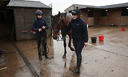 Race horses are led back in after gallops at a stables in Worcestershire. An outbreak of equine flu has forced the cancellation of all British racing on Thursday.