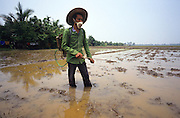 PEASANT FARMING, Malaysia. Peasant farmer with fertilizer spray, in padi, Kedah State. World Bank funded  project. Poor farmers, peasants, planting, harvesting, cultivating rice padi.