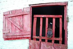 Baia de cavalos, em Encruzilhada do Sul. FOTO: Jefferson Bernardes / Preview.com