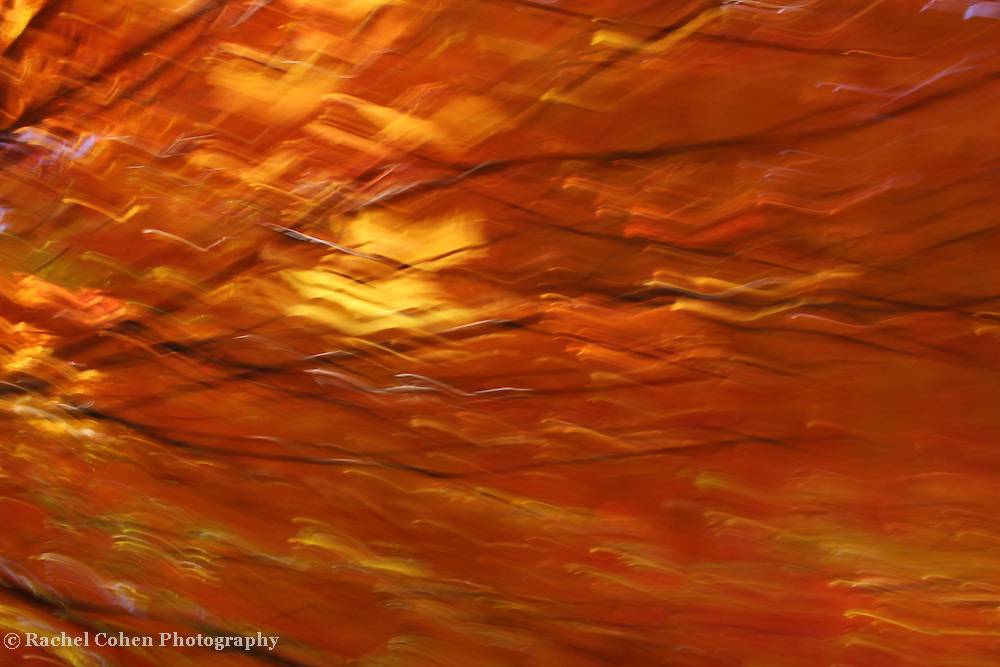"""""""Light of Autumn's Past""""<br /> <br /> Streaming light, foliage and branches give a wonderful abstract perspective on autumn!!<br /> <br /> Nature Abstracts by Rachel Cohen"""