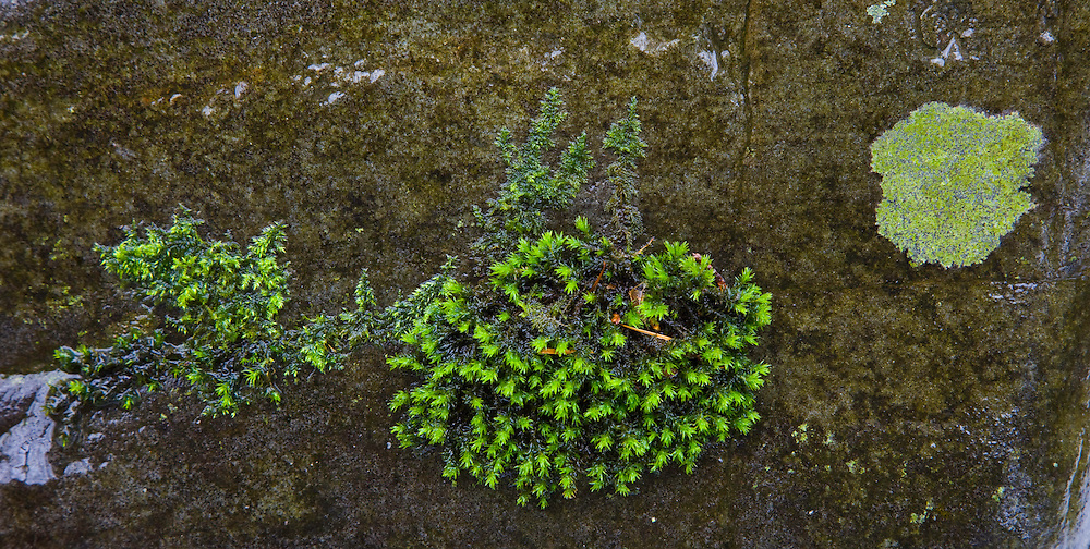 Moss, The Elan Valley, Rhayader, Mid-Wales, UK          MUSGO, VALLE DE ELAN, RHAYADER, GALES MEDIO, REINO UNIDO