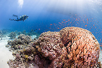 Spectacular visibility in the Egptian Red Sea