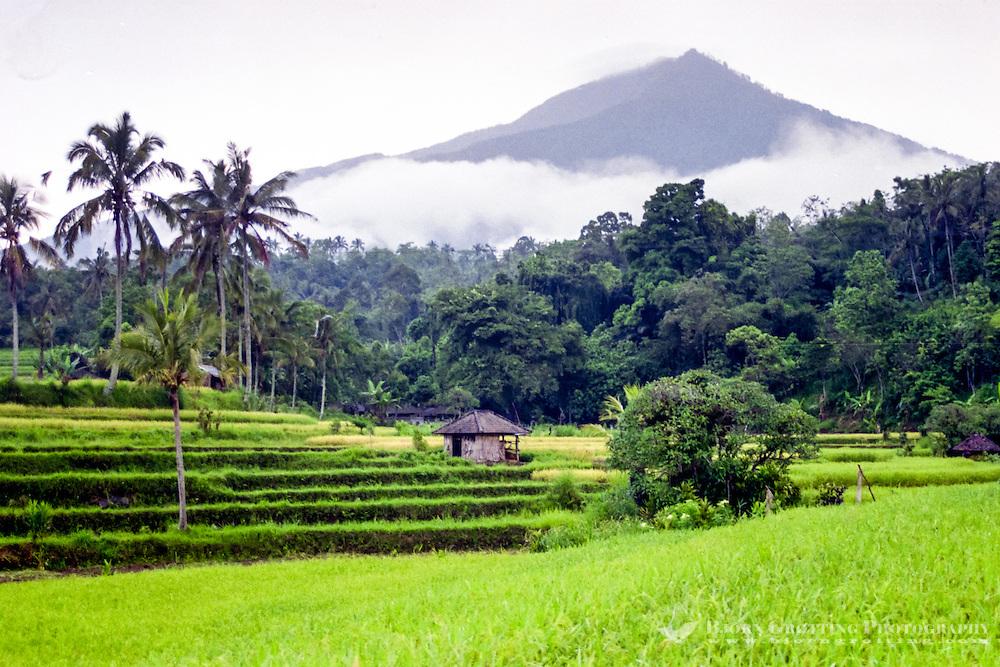 Bali, Tabanan, Jatiluwih. At 700m altitude, with beatiful terraced paddy fields.
