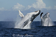 southern humpback whales, Megaptera novaeangliae, double breach while migrating up the east coast of Africa toward the breeding grounds in Mozambique, Wild Coast, Transkei, South Africa (digital composite of two pictures taken in close succession)