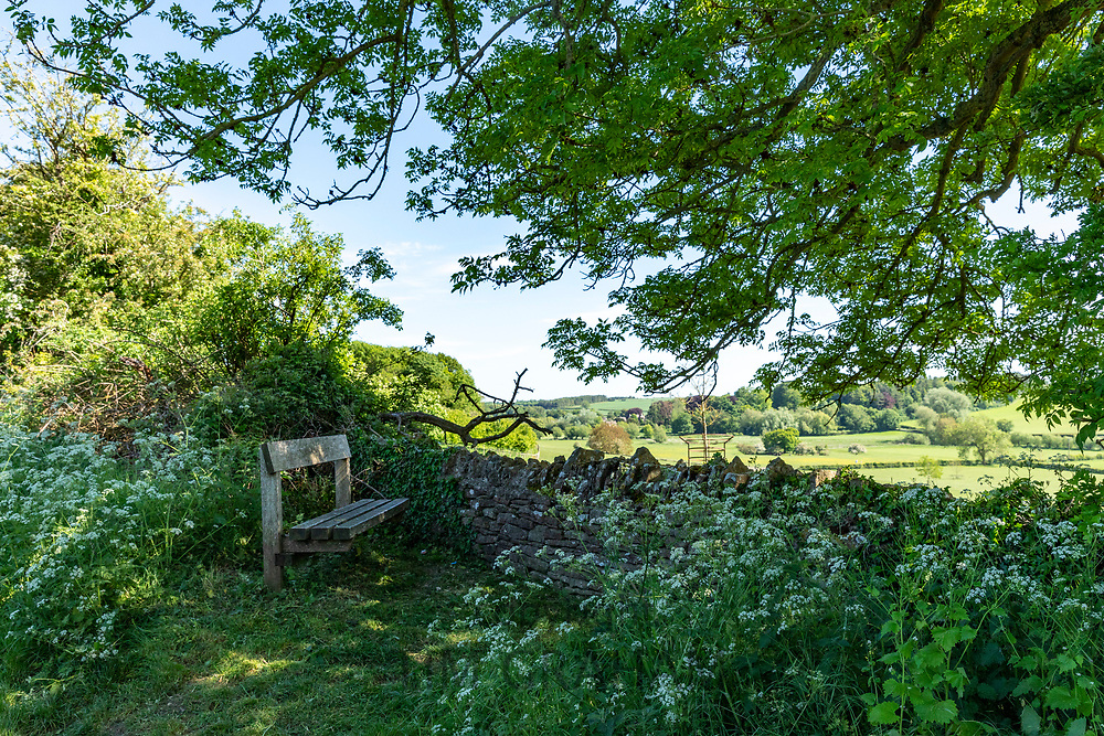 Cow parsley by rustic country bench with far reaching views, a welcome rest during a country ramble in The Cotswolds in Oxfordshire, UK