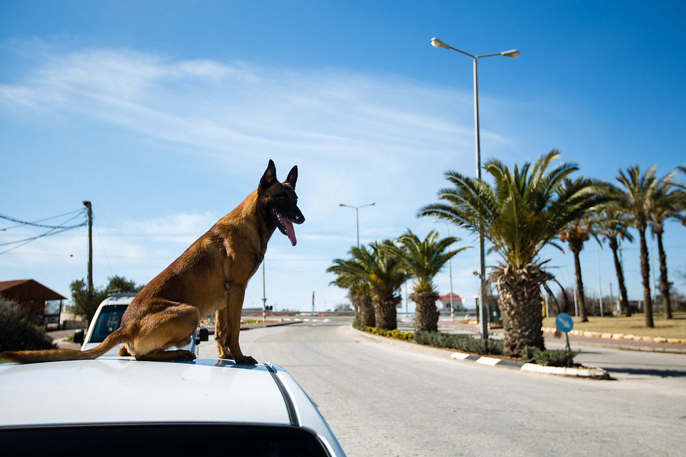 A dog owned by a security guard (not pictured) sits on the roof of a car at the entrance to the West Bank Jewish settlement of Ofra, on January 28, 2016.