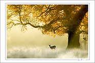 Cheshire Wildlife Trust Collection (Limited Edition Fine Art Prints)