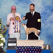 Italian Greyhound Club of America 05/23/2019