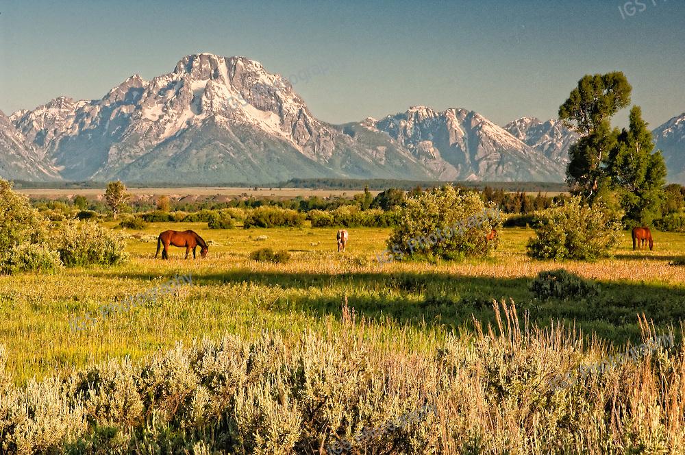 Elk Ranch Flats Grand Teton National Park
