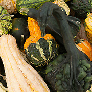 Gourds at a farm stand in Massachusetts