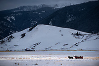 A sleigh carrying visitors to the National Elk Refuge glides beneth Miller Butte and the Gros Ventre Mountains on a tour to see wintering elk Friday afternoon.