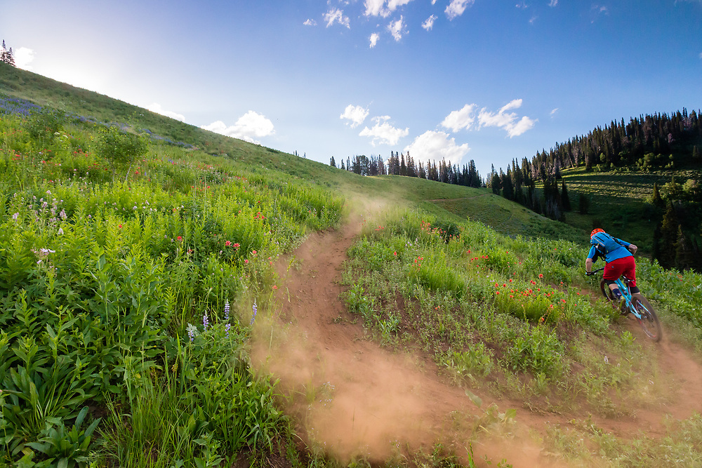Andrew Whiteford riding Singletrack and flowers during the summer months in the Tetons. Mail Cabin Trail.