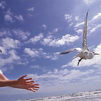 Rehabilator releases a bird.     (Photo by Kim Christensen)