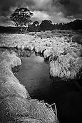 Stream, Barrington Tops, NSW, Australia