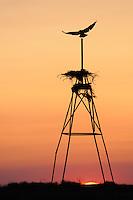 Birds nest, Rostovsky Nature Reserve, Rostov Region, Russia