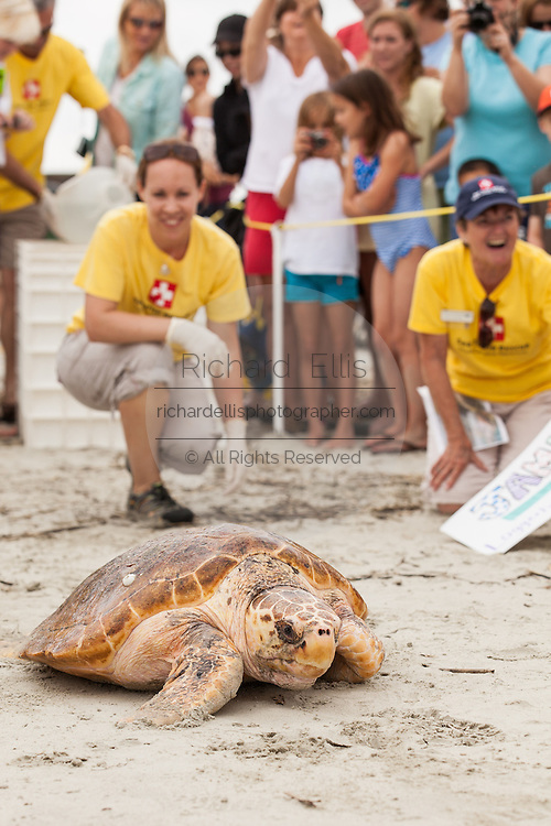 Volunteers from the South Carolina Aquarium release a rehabilitated Loggerhead Sea Turtles May 18, 2012 in Isle of Palms, South Carolina. The turtle was one of two that were rescued and nursed back to health by the sea turtle hospital at the aquarium.