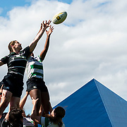 Rugby by Mitchell Scaglione