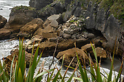 Layered rock patterns erode from coastal cliffs at Punakaiki Pancake Rocks and Blowholes Walk, on Dolomite Point in Paparoa National Park, between Westport and Greymouth in the West Coast region of New Zealand's South Island.