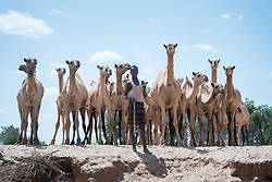 27 January 2019, Burka Dare IDP site, near Micha, Seweyna woreda, Bale Zone, Oromia, Ethiopia: A young man tends to his camels in the Burka Dare site for internally displaced people. The Lutheran World Federation supports internally displaced people in several regions of Ethiopia, through emergency response on water, sanitation and hygiene (WASH) as well as long-term development and empowerment projects, to help build resilience and adapt communities' lifestyles to a changing climate.